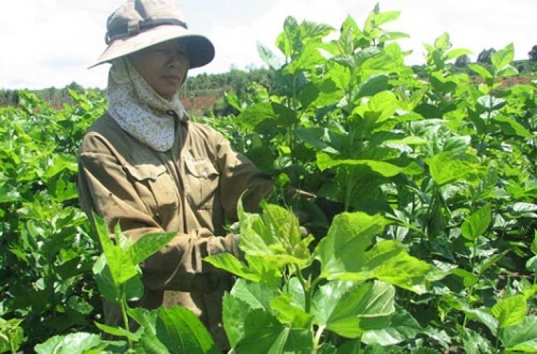 Dự án giảm nghèo Tây Nguyên tỉnh Đắk Nông - Thúc đẩy các hoạt liên kết thị trường ở các xã nghèo trong vùng dự án