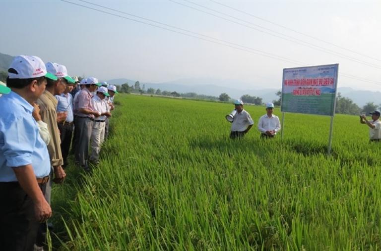 Giải pháp canh tác lúa bền vững