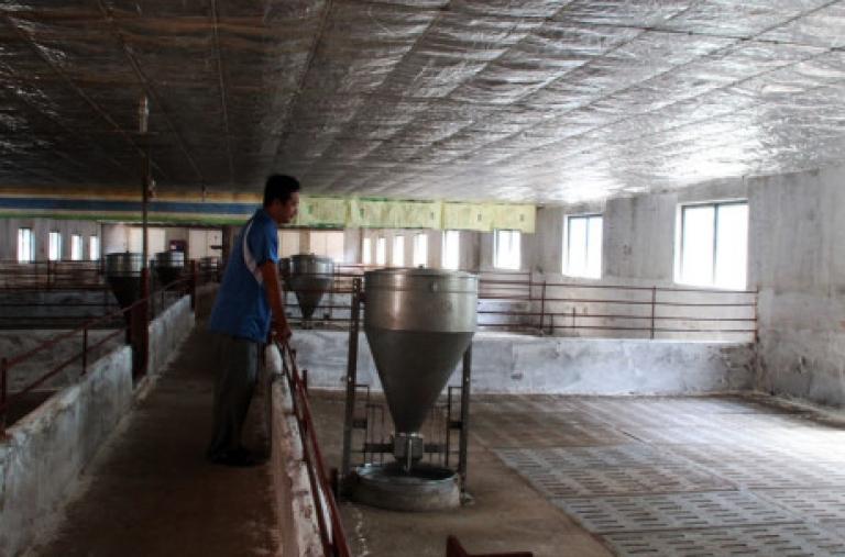 Đồng Nai 'giải cứu' heo bằng cách xẻ thịt bán cho công nhân