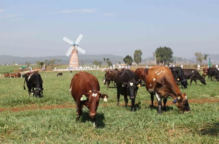 Phát triển nông sản sạch là bền vững