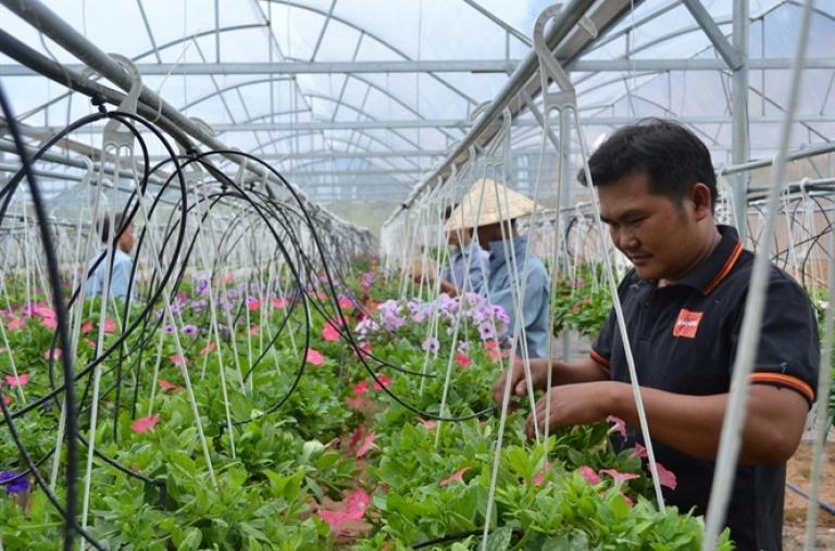 Phát triển nông sản theo chuỗi gắn với nhãn hiệu hàng hóa