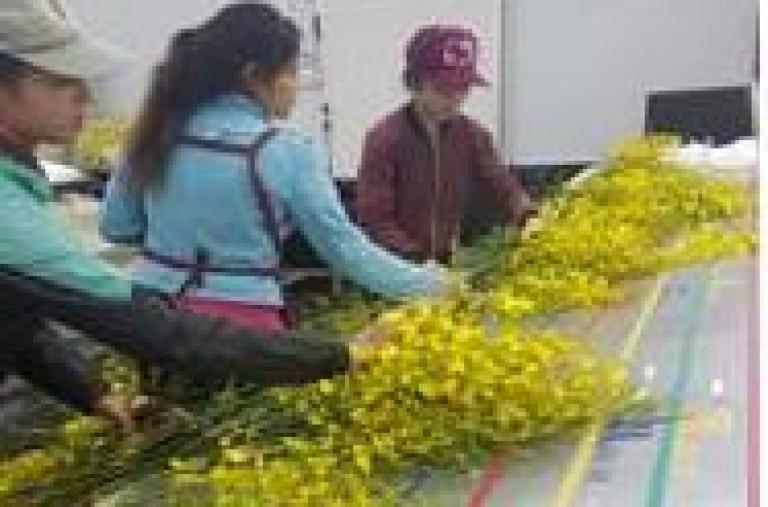 Lâm Đồng: Phát triển kinh tế tập thể góp phần tái cơ cấu ngành nông nghiệp