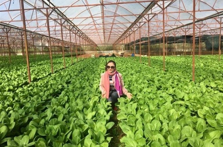 Nông nghiệp hữu cơ có khác nông nghiệp sạch?