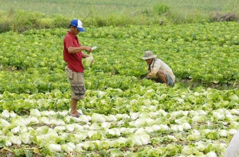 Sản xuất nông nghiệp an toàn