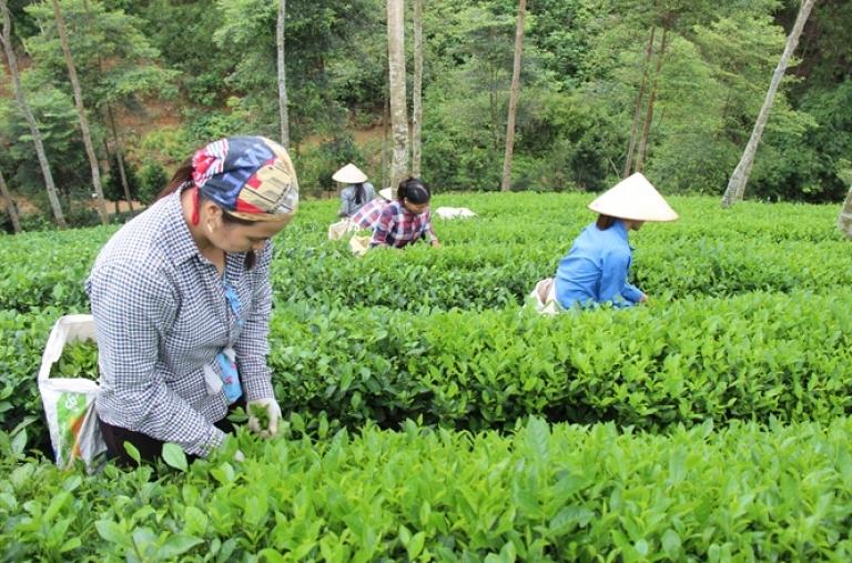 Chớ làm nông nghiệp hữu cơ theo phong trào