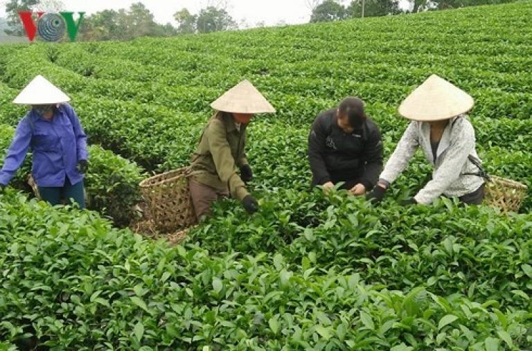 Nông nghiệp hữu cơ cho giá trị gia tăng cao