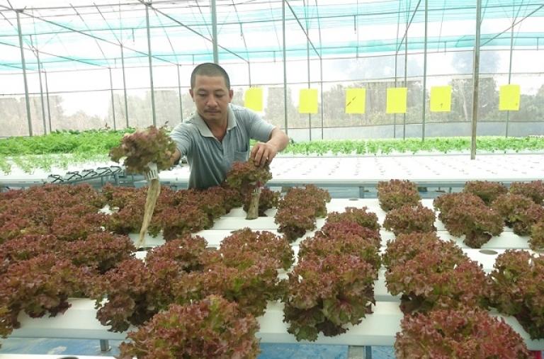 Tập trung xúc tiến đầu tư vào nông nghiệp và năng lượng tái tạo