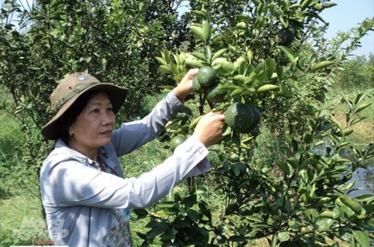 Tăng cường liên kết phát triển cây ăn trái xuất khẩu